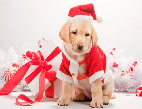 Новый год 2018 — год собаки
